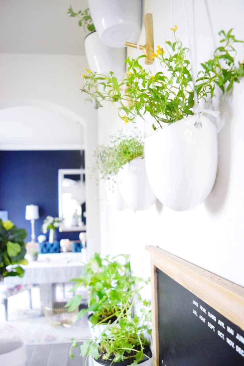How to make a floating plant wall in your home indoor plants herbs and vegetable garden kitchen design plant wall