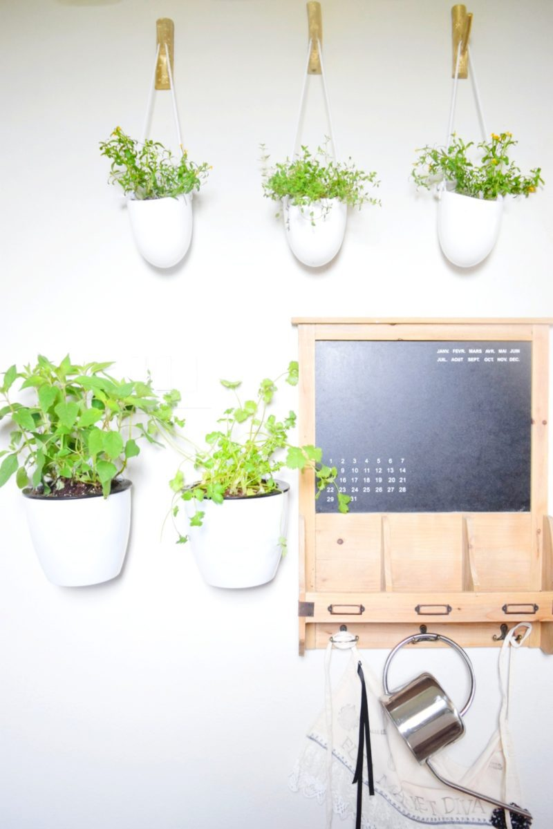Floating plant wall with herbs and vegetables kitchen design unique plant design indoor plants plant lady
