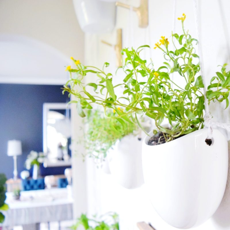 DIY floating plant wall with herbs and veggies