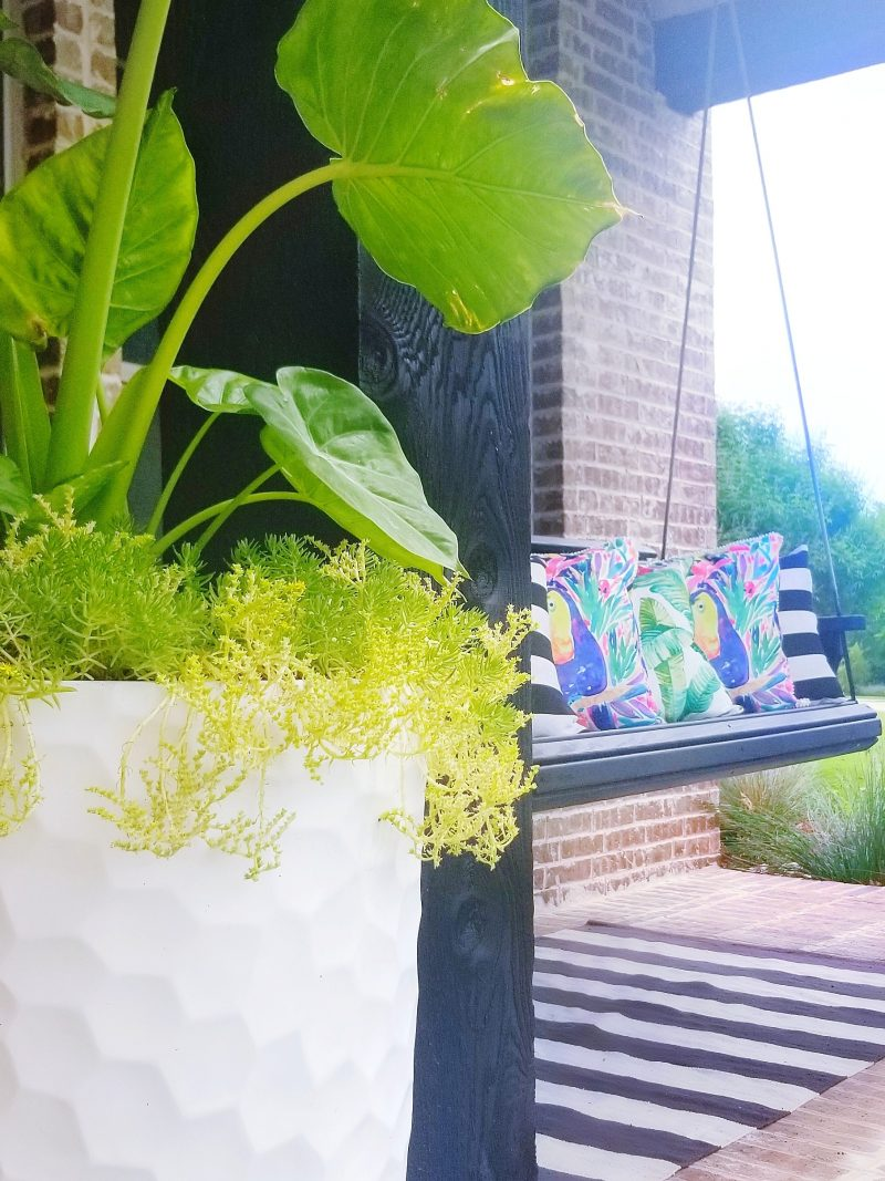 tropical plant in planter and front porch swing