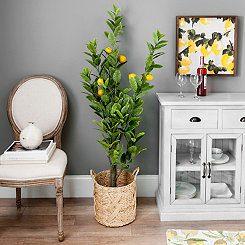 5 foot Bright Lemon Tree